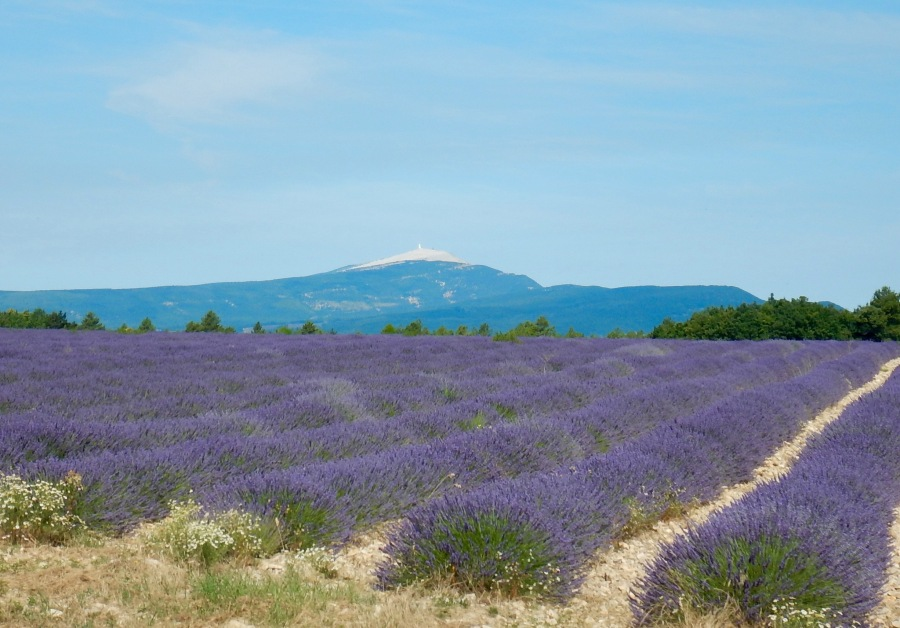 view of Mt. Ventoux in the background