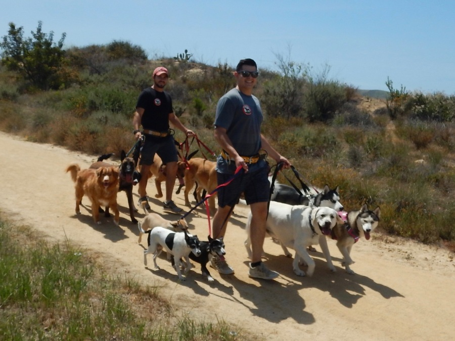 dog walker anyone?